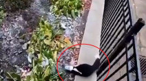 WATCH: Skunk rescue shows why you should properly store your garbage this winter