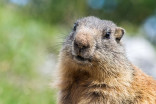 Groundhog Day 2020: The results are in, but the vote isn't unanimous