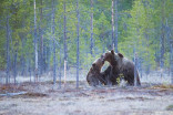 Be 'bear aware' this camping season: What you need to know