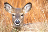 'Zombie deer disease' detected in three provinces, 24 states