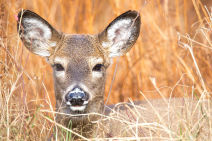 Weather B C Renewed Snowfall Risk With Next System Zombie Deer Disease Detected In Three Provinces 24 States