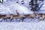 Reindeer cyclones are as strange, mesmerizing as they sound