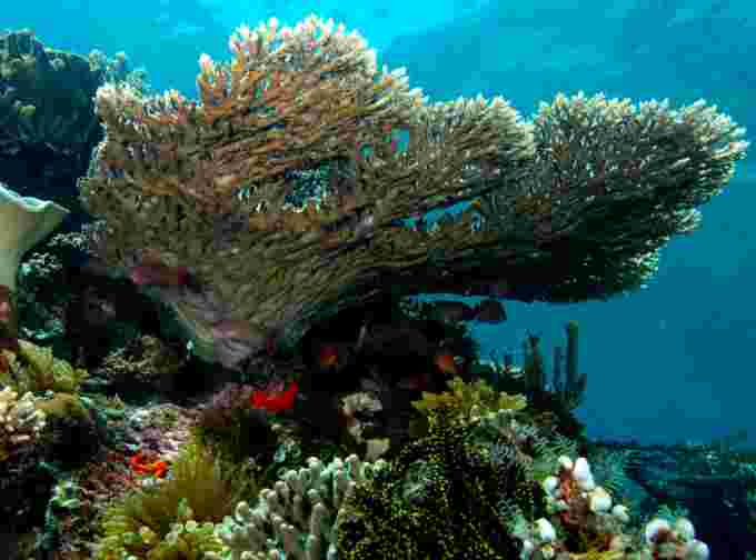 coral reef indonesia wiki cc