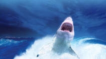Video: Great white shark surprises fishing boat full of people