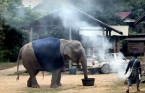 Elephants given sweaters to keep warm in Thailand