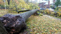 Nearly 100,000 without power in Montreal as potent storm swipes eastern Canada