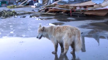 Dog swept away by tornado in Alberta finds her way home