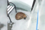 Lost puppy rescued from bus stop in -32C weather