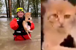 This cat did not want to be rescued from flood water