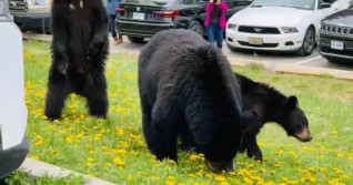 "Photographers ""harassing"" wildlife in Jasper National Park, officials say"