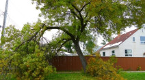 Winnipeg homeowners still in the dark days after storm desperate for power