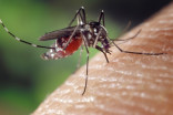 Human case of West Nile reported in southern Ontario