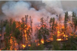 Above-average forest fire risk for NW Ontario, says federal scientist