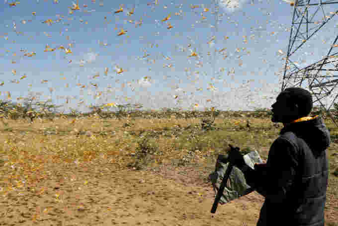 REUTERS: FILE PHOTO: A man attempts to fend-off a swarm of desert locusts at a ranch near the town of Nanyuki in Laikipia county, Kenya, February 21, 2020. REUTERS/Baz Ratner