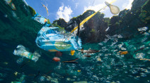 Over 600 divers set record for biggest ocean clean-up