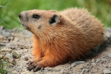 Guru or fraud? We investigated five groundhogs