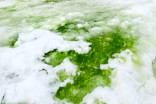 'Green snow' discovered by scientists in Antarctica