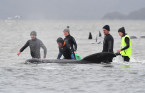 108 pilot whales rescued from Australia's worst mass stranding