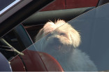 There's a dog in a hot vehicle! What should I do?