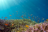 Oceans can be restored within 30 years, study finds