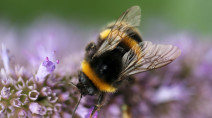 New 'outside the box' solutions that can help save the bees