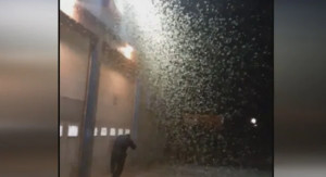 Shovels needed to move dead moths after millions swarm Quebec cities