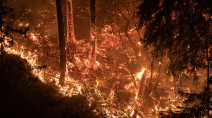 Napa Valley wineries menaced by wildfire, as second California blaze kills three