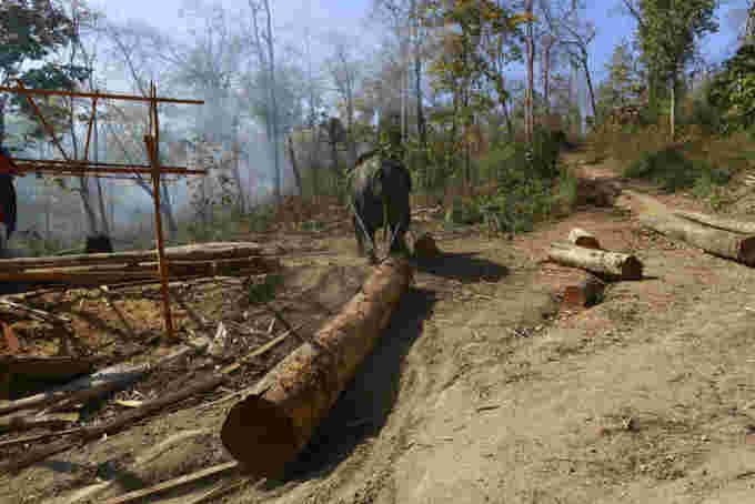 reuters: An elephant pulls a teak log at a logging camp in Pinlebu township, Sagaing division in northern Myanmar March 6, 2014. REUTERS/Soe Zeya Tun