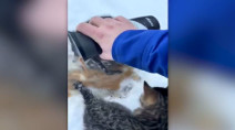 Frozen Canadian kittens rescued with warm coffee in Alberta