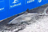 'What a day!': Get a close-up view of Nova Scotia's sharks