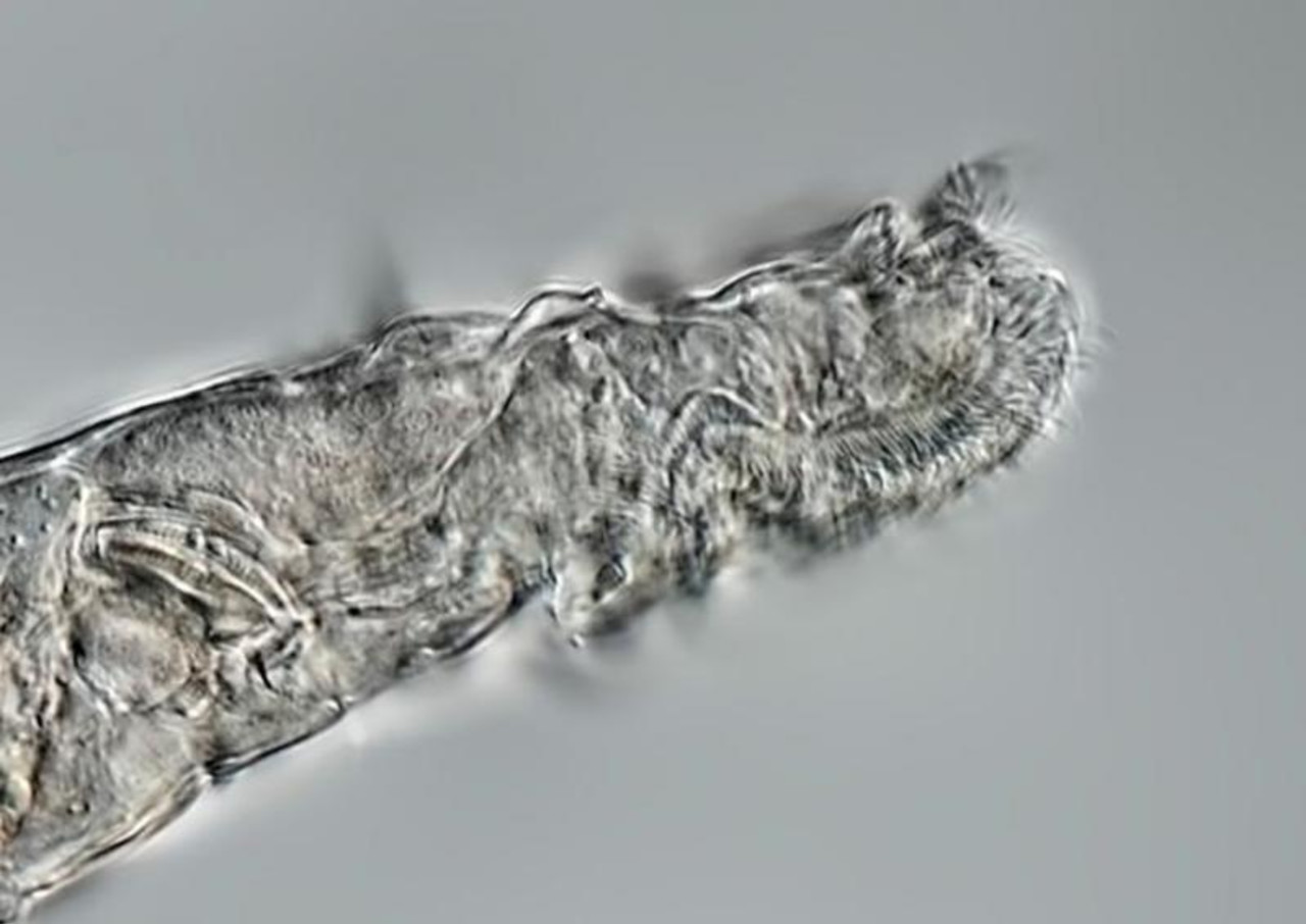 24,000-year-old microorganisms thawed from Siberian permafrost