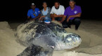 Leatherback sea turtles travel 12,000 km from Canada to Trinidad