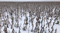 Manitoba: 'Unprecedented' wet fall hurts crops, puts flood fighters into action