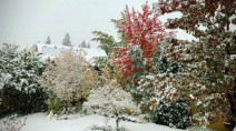 Freezing levels plunge in B.C., blast of early season wet snow