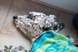 Family rescues frozen fawn from snow storm