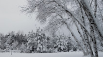 End in sight to the intense snowstorm in Ontario as totals pile up
