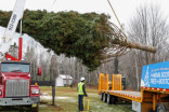 Massive Christmas tree destined for Boston cut down near Trenton