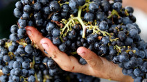 Grape expectations as France forecasts more wine to flow in 2020