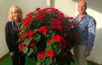 'Half-dead' poinsettia from grocery store just won't stop growing