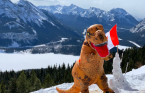 Calgary 'Dino Guy' finishes mountain summits in T. rex costume