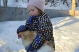 4-year-old girl and pet hen sledding duo are an internet sensation