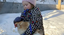 4-year-old girl and pet hen sledding duo an internet sensation
