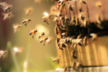How to handle a bee invasion this 'swarm season'