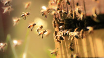 You're more likely to get stung in certain types of weather