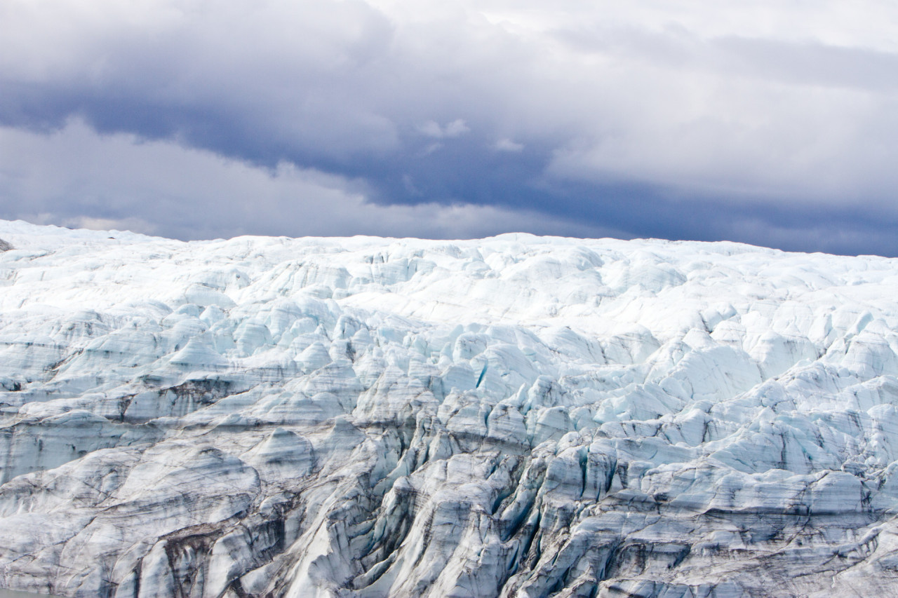 Scientists shocked to discover plants under mile-deep Greenland ice