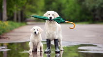 Spring's hidden dangers: Here's how to keep your pet safe