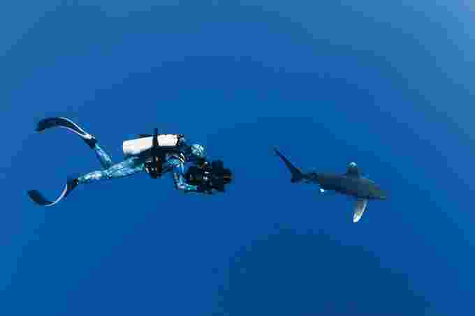 Sharkwater Extinction Rob Stewart Filming Oceanic White Tip Shark