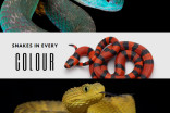 Photos: There's a snake for every colour of the rainbow