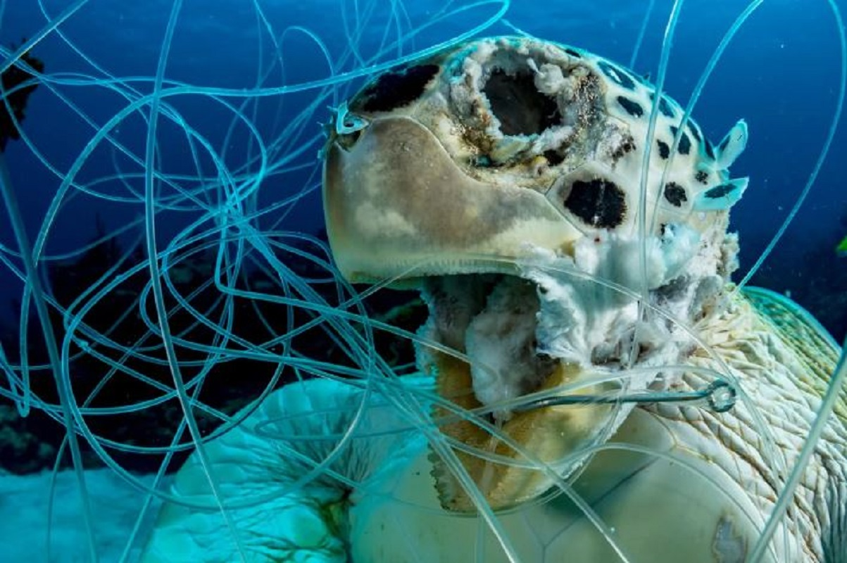 Canadian photographer hopes image of trapped sea turtle will inspire change