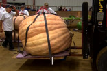 Here's what it takes to grow a giant pumpkin that weighs over 2,000 lbs